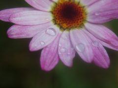Weine im Regen. ..denn sieht man.. .die Tränen nicht. .