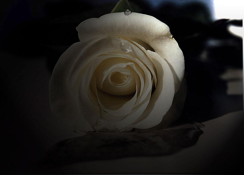 Weinende Rose