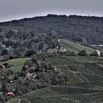 Weinerge rund um Fellbach und  den Rotenberg