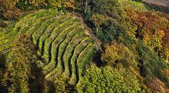Weingarten im Herbst!