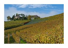 Weingut am Genfersee