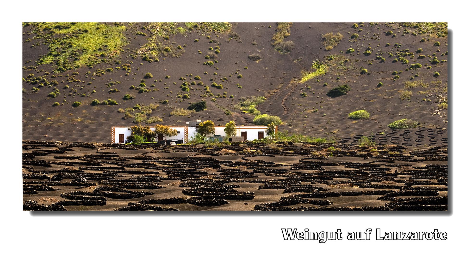 Weingut auf Lanzarote