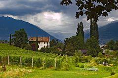 Weingut in Südtirol