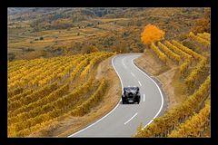 Weinherbst in der Wachau