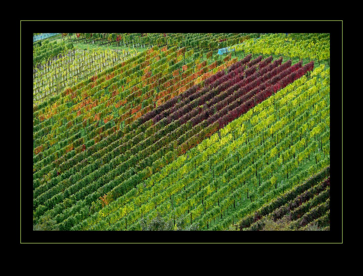 Weinlaubpalette