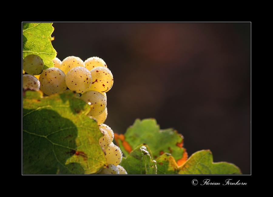 Weinlichter /1