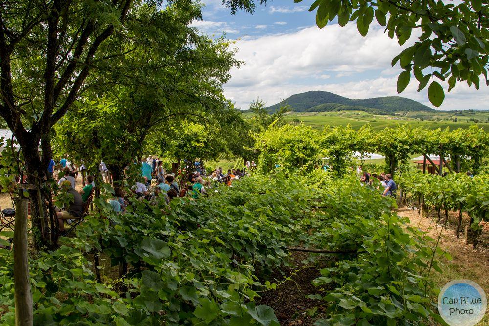 Weinpergola am Kalmitrundweg beim Kalmitfest
