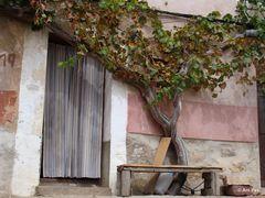 Weinstock - Albarracin Teruel Spanien