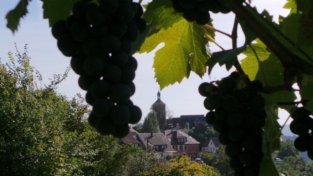 Weintrauben - Bürg