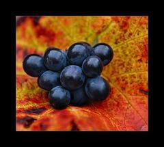 Weintrauben im Blättermantel