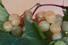 Weintrauben in Argentinien