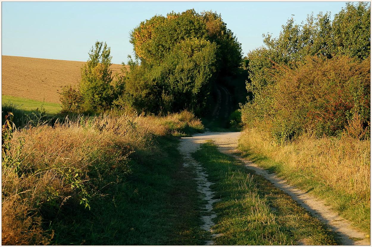 Weinviertel - Herbst