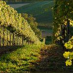 Weinviertler Wein