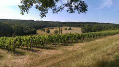 Wein+Wald