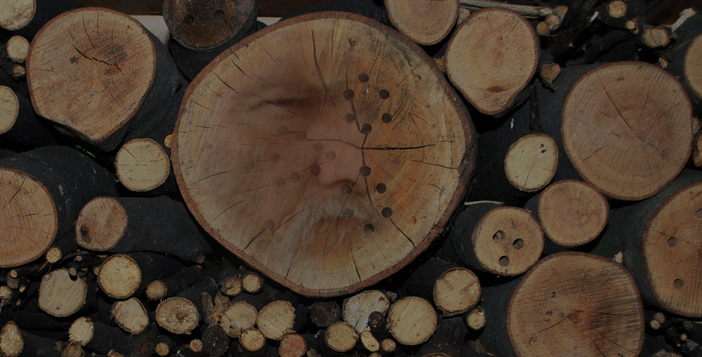 Weisheit im Holz