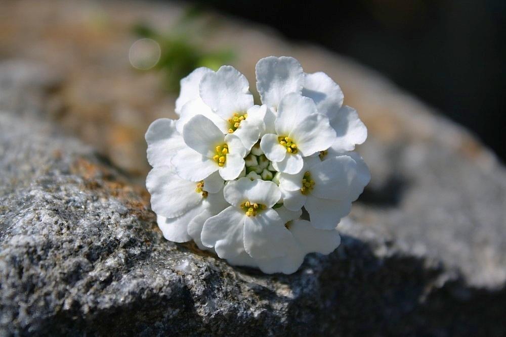 Weiß auf Stein