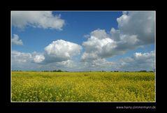 Weiß blauer Himmel über gelbem Grund