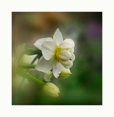 Weiß-Gelbe Schönheit...