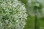weiß-grüne Details