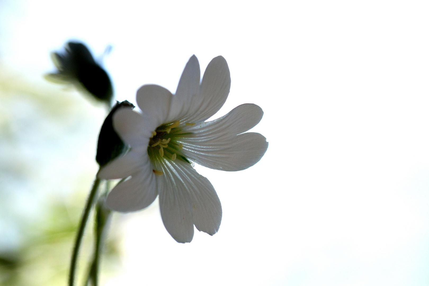 Weiß im Gegenlicht