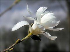 Weiß: Symbol von Reinheit und Klarheit