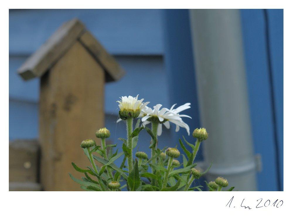 weißblau