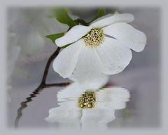 Weiße Blüten ...