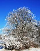 Weiße Blüten ;-)