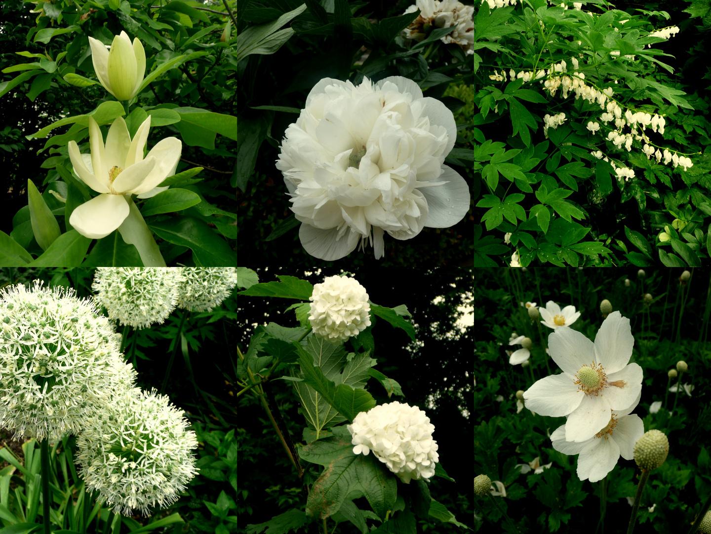 Weiße Blüten...
