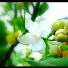 Weiße Blume