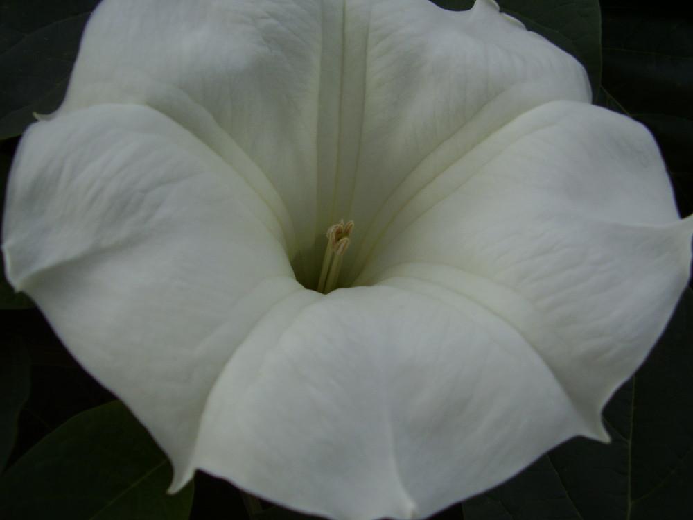 Weiße Blume Foto & Bild | pflanzen, pilze & flechten, blüten ...