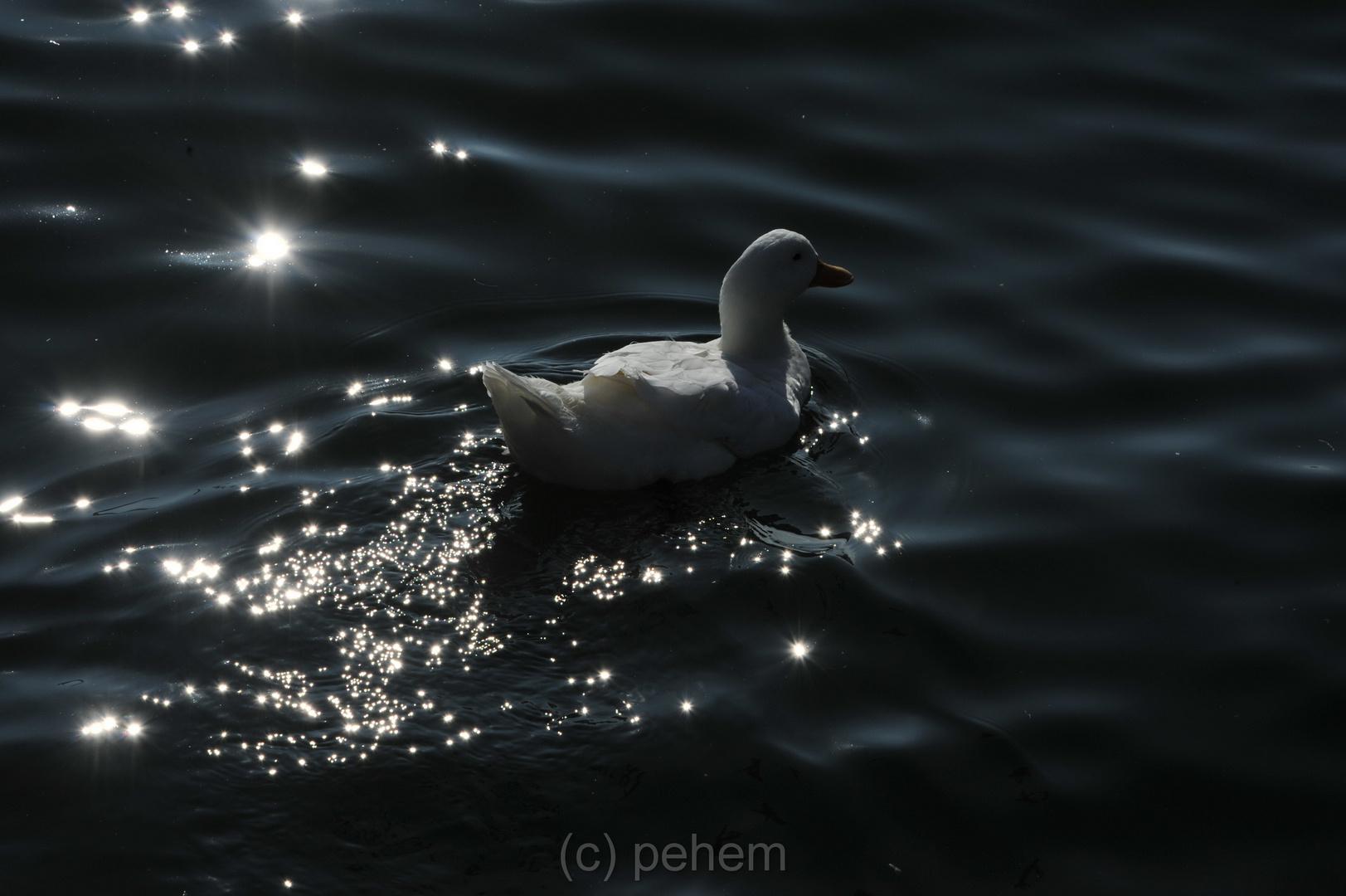 Weisse Ente