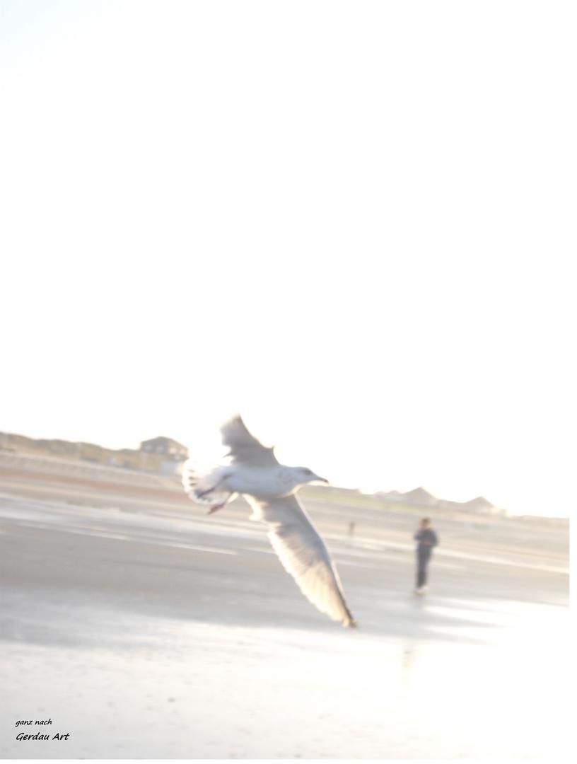 weiße Möve