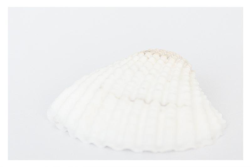 weiße Muschel