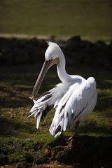 Weiße Vogel :)