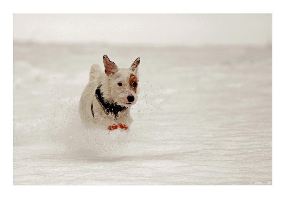 Weißer Hund auf weißem Grund
