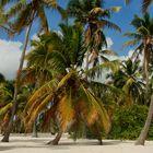 weißer Sand und Palmen