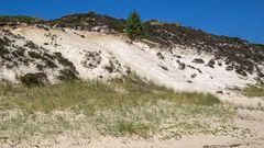 Weißes Kliff, Braderup/Sylt ... 01