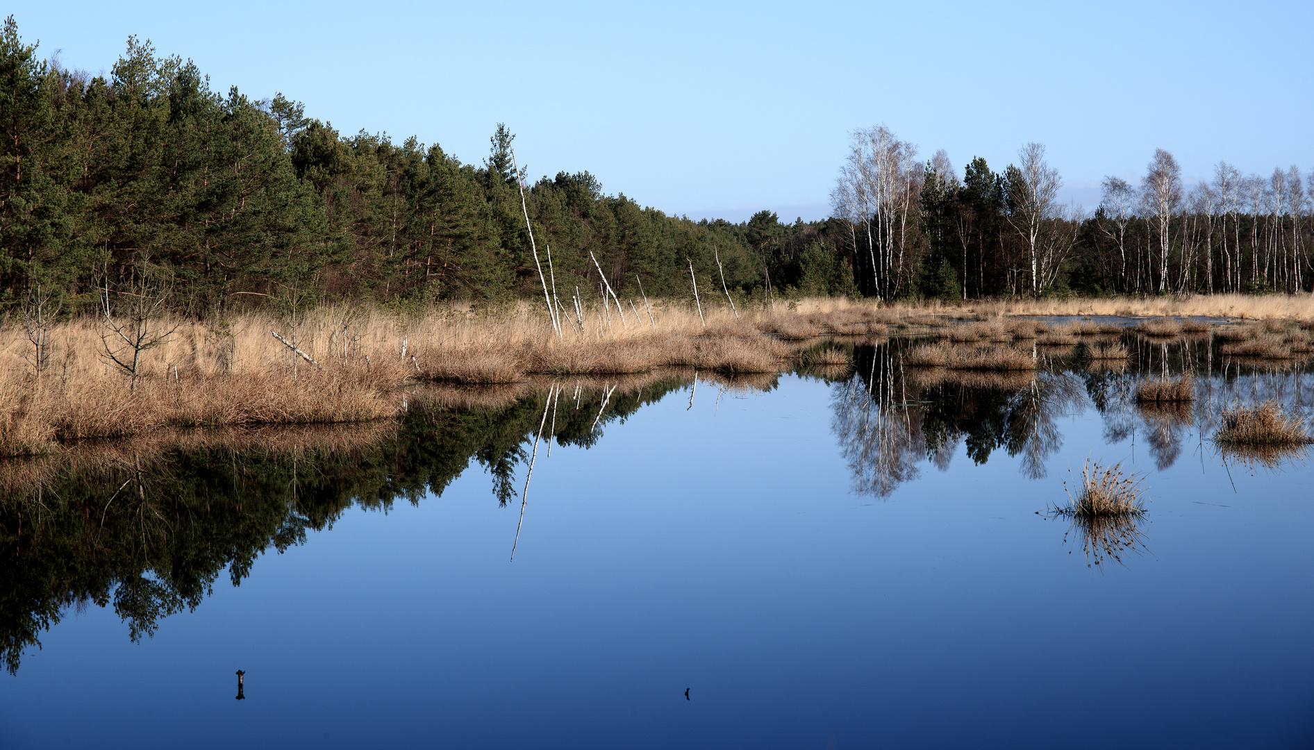 Weisses Moor