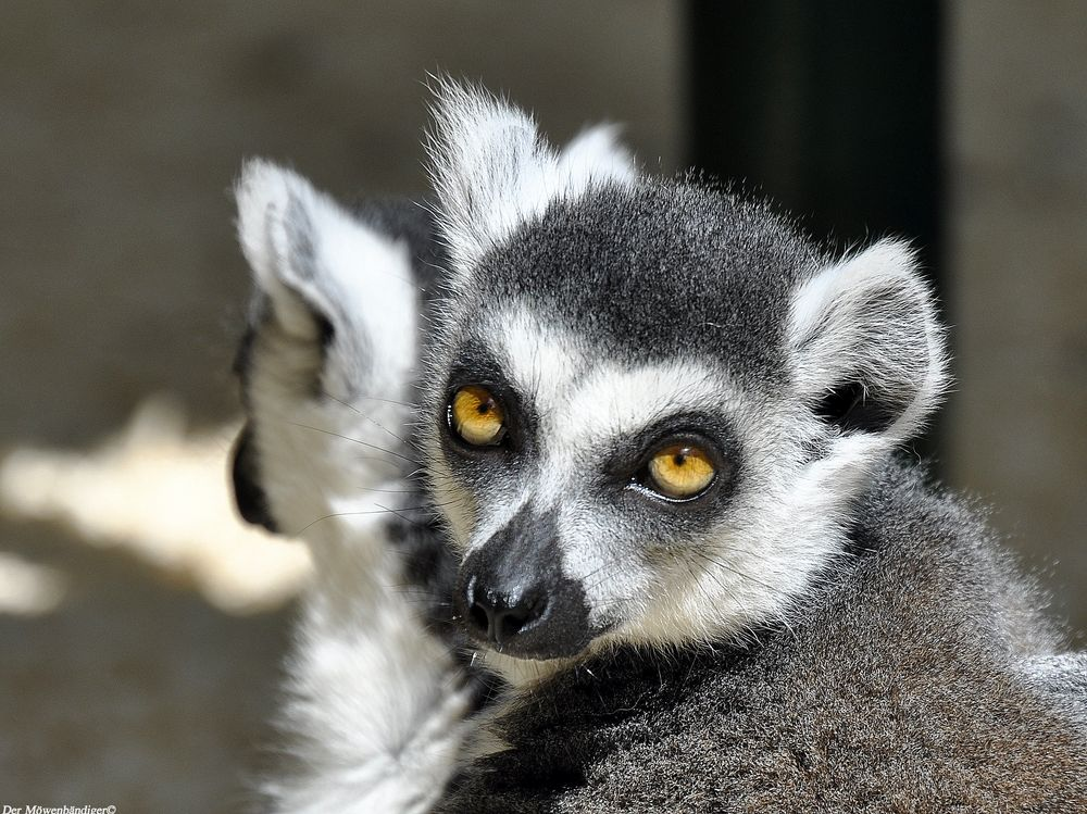 Weißt Du ob Madagaskar schön ist ??