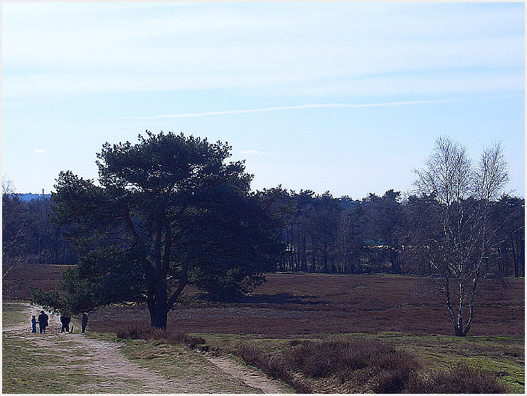 Weitblick - Westruper Heide bei Haltern am See
