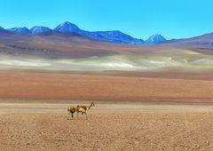 Weite Atacama
