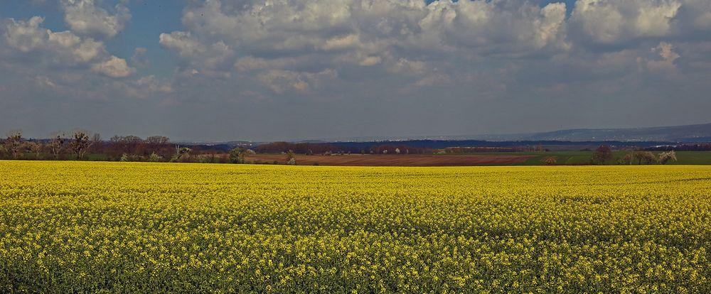 Weite Felder in der Nähe des Cottaer Spitzberg...