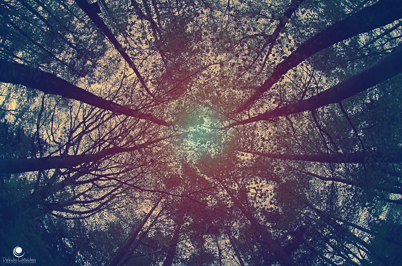 weitwinkelbäume