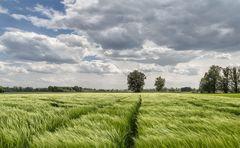 Weizenfeld und Wolkenstimmung