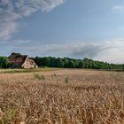 Weizenfelder - Bad Windsheim