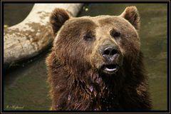 ...welch eine Bärenhitze...