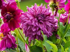 Welch eine Blütenpracht