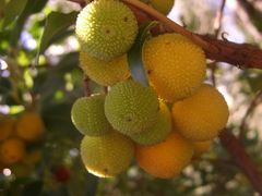 Welche Frucht bin ich?