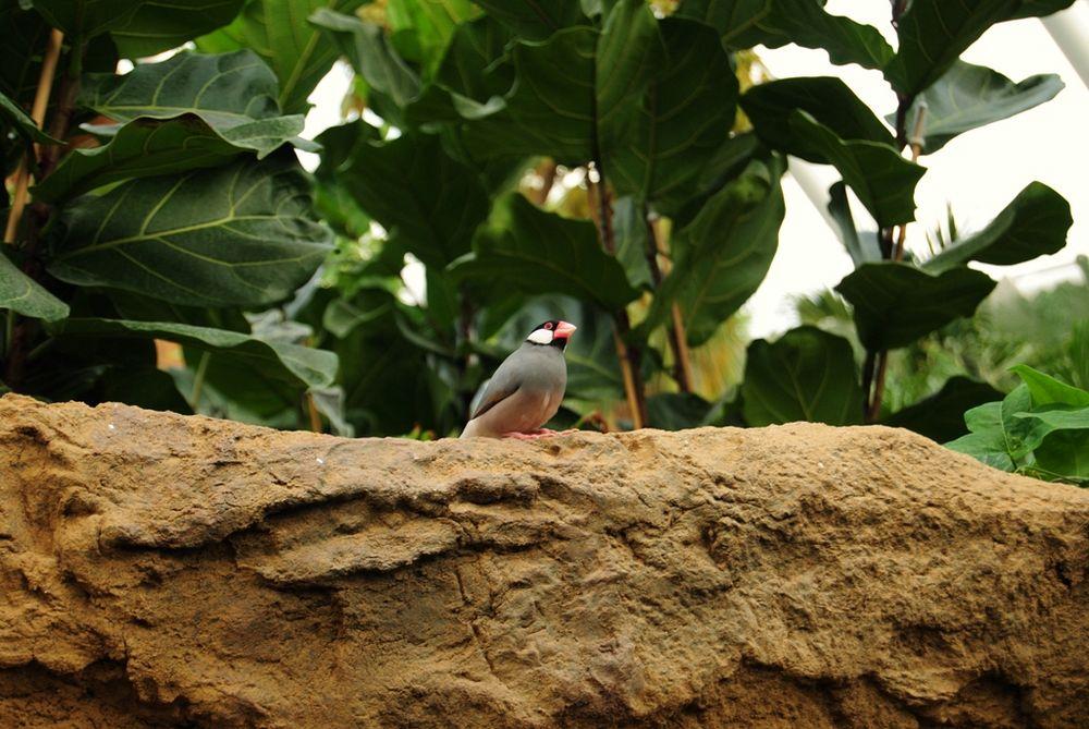 Welche Vogelart ist das?